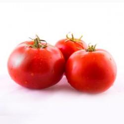 گوجه فرنگی گلخانه ای -خوشه ای ممتاز